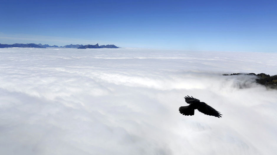 A bird flies over the fog covering Lake Thun on a sunny autumn day in the Berner Oberland on the Niederhorn mountain near Interlaken, Switzerland